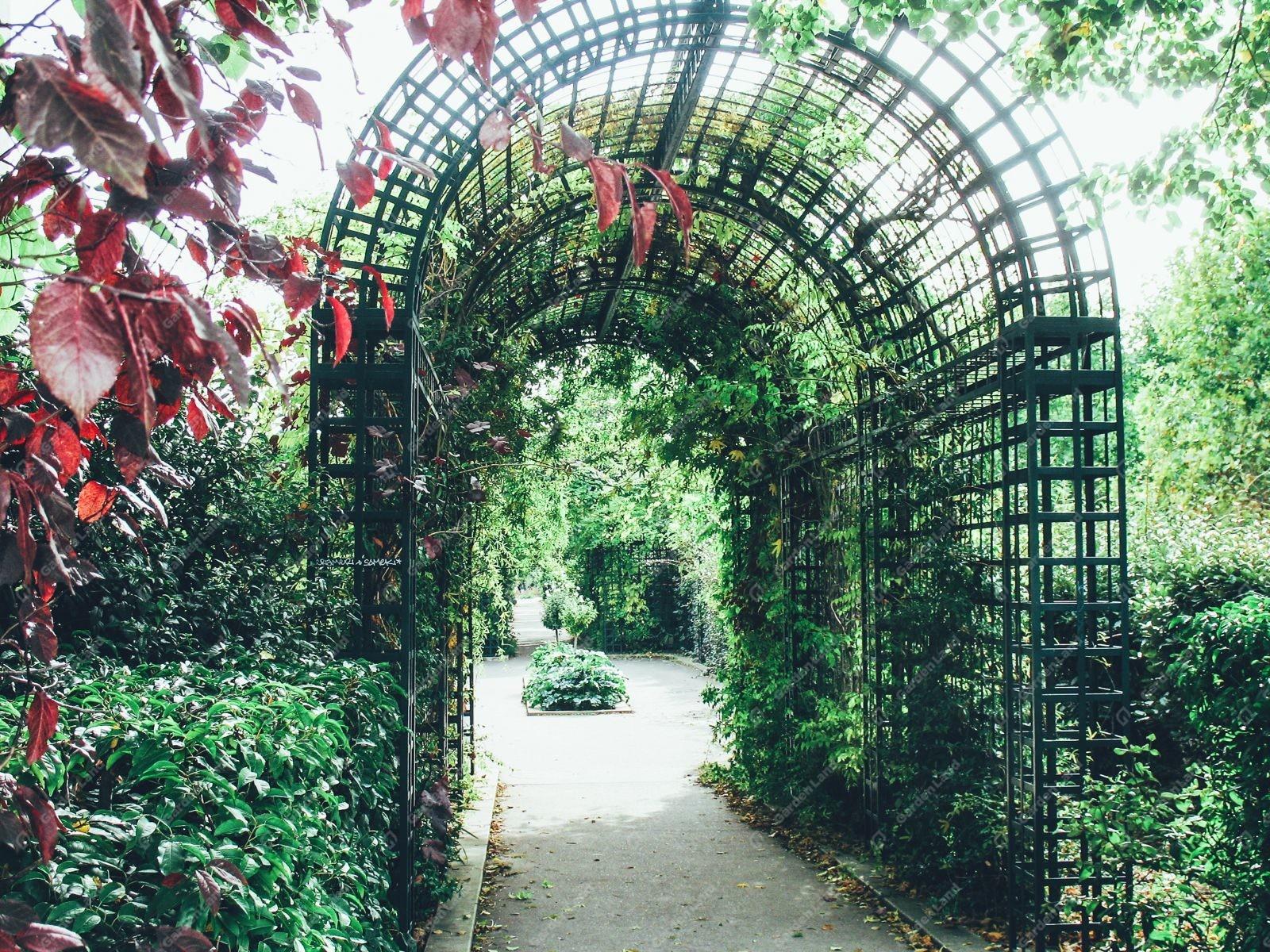 виноградные арки фотогалерея результате педаль