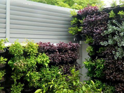Лучше, чем у соседа: 6 дизайнов грядок на даче