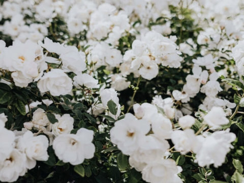 Арки с вьющимися растениями — украшение дачного участка