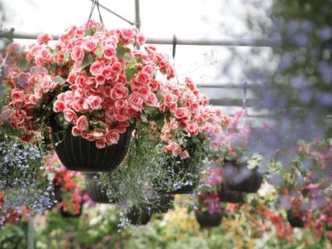 8 дачных идей для цветочных контейнеров