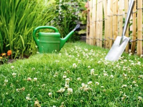 7 идей для вашего участка, что посадить вместо газона